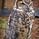 Great Horned Owl by solareclips~Julie  Alexander