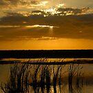 Everglades Evening by David Lee Thompson