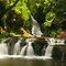waterfalls All around Brisbane ..