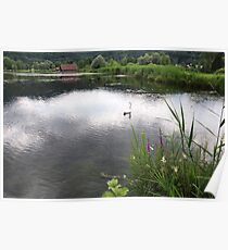 Edge of Lake with Swan Poster