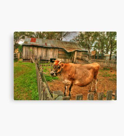 A cow of a shot ! Canvas Print