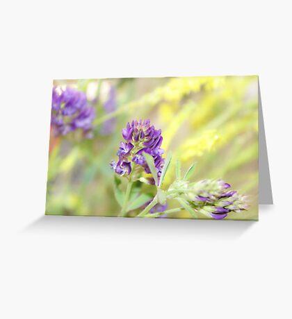 Purple Clovers Greeting Card