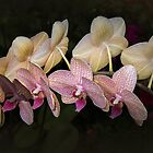 Orchid Perfection by Elaine Teague