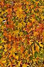 1500 Piece Jigsaw Puzzle by photosbyflood