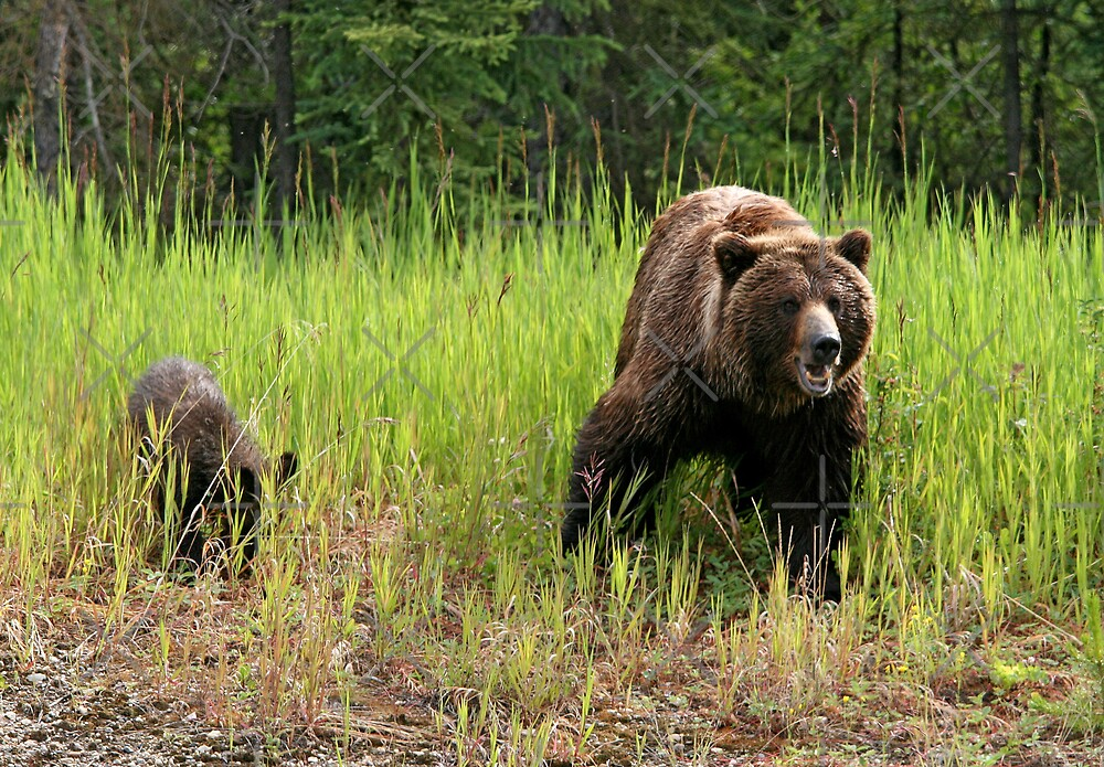 Mom Grizzly and One Twin by Vickie Emms