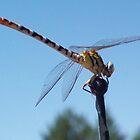 Dragonfly by Camilla Wall
