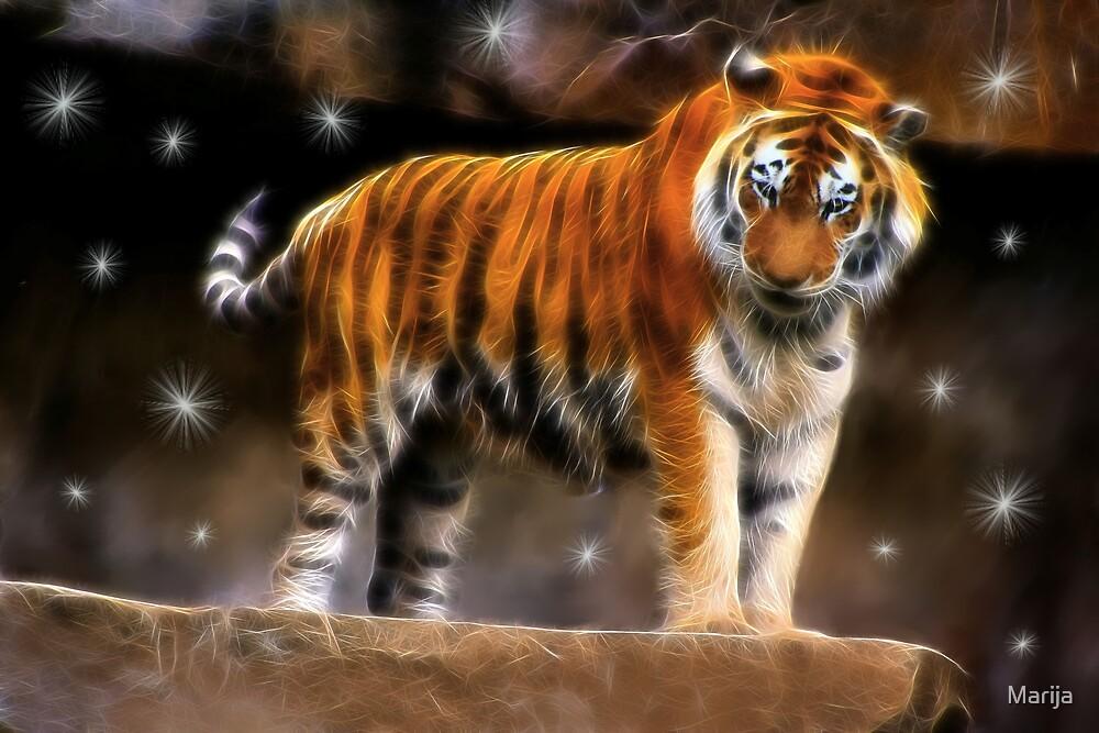 Tiger Totem by Marija
