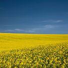 Fields of Gold by Irina Chuckowree