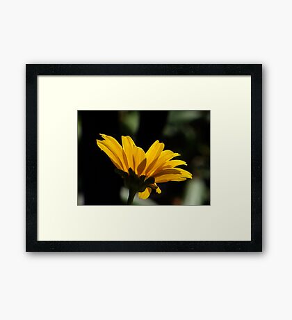 Daisy Silouette Framed Print