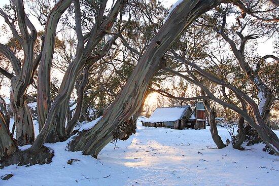 Wallace Hut Dawn, Falls Creek, Victoria, Australia by Michael Boniwell