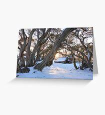 Wallace Hut Dawn, Falls Creek, Victoria, Australia Greeting Card