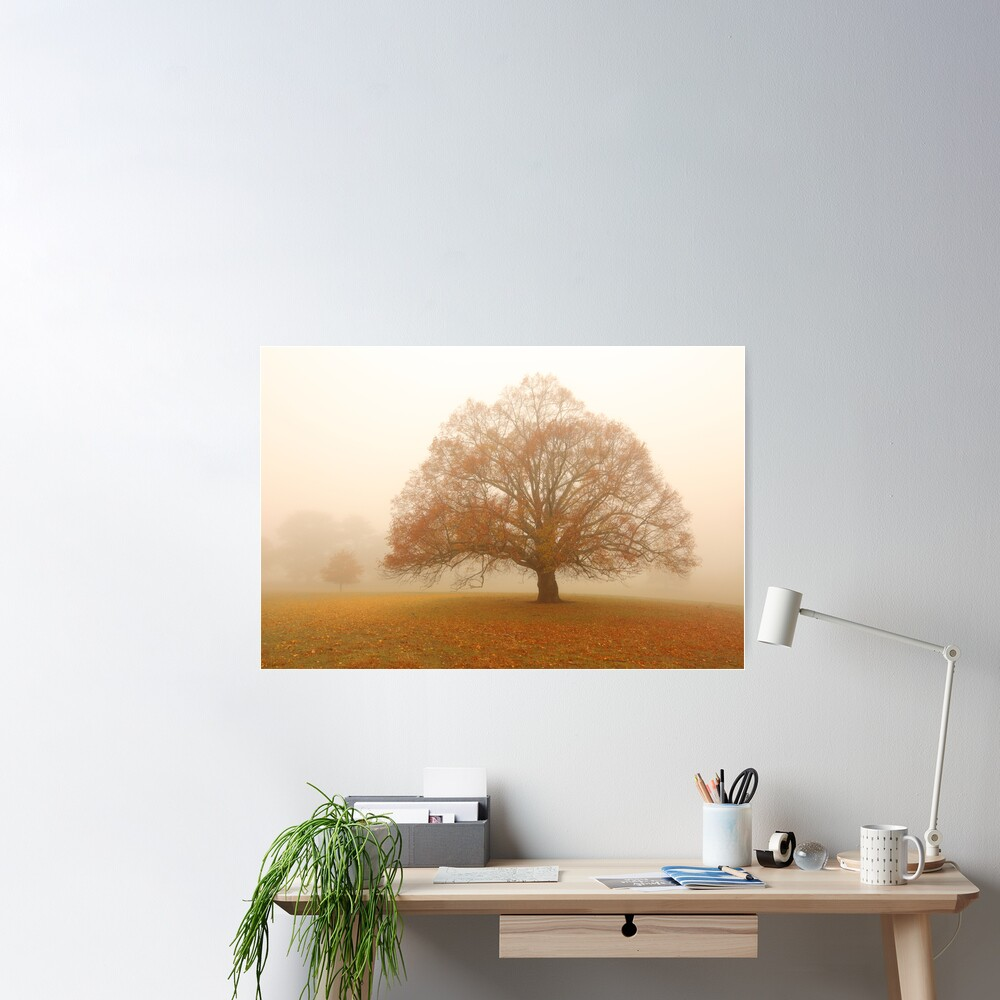 Autumn Fog, Daylesford, Australia Poster