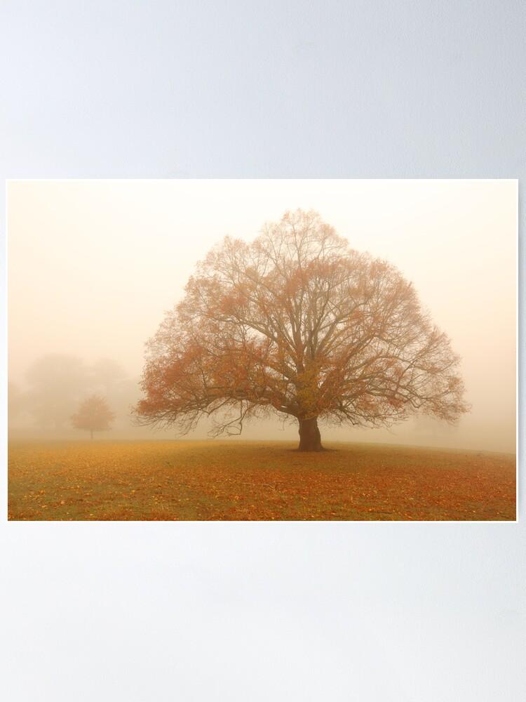 Alternate view of Autumn Fog, Daylesford, Australia Poster