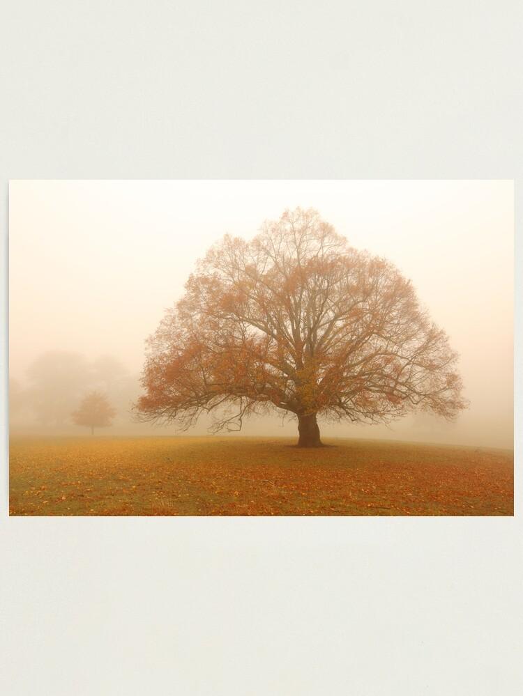 Alternate view of Autumn Fog, Daylesford, Australia Photographic Print