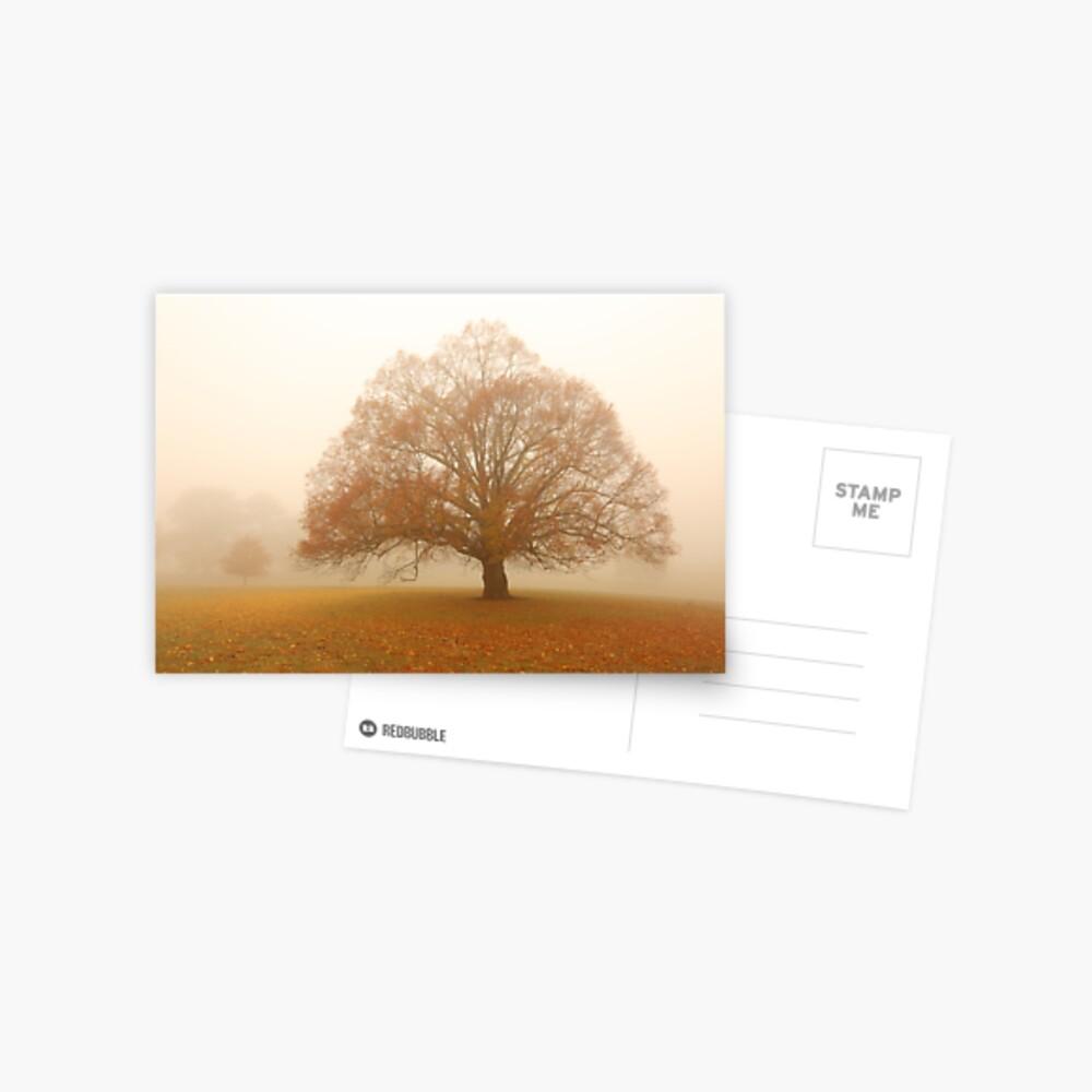 Autumn Fog, Daylesford, Australia Postcard