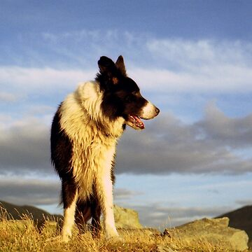 Border Collie Heaven: The Chronicles of Indy by mhhaslam