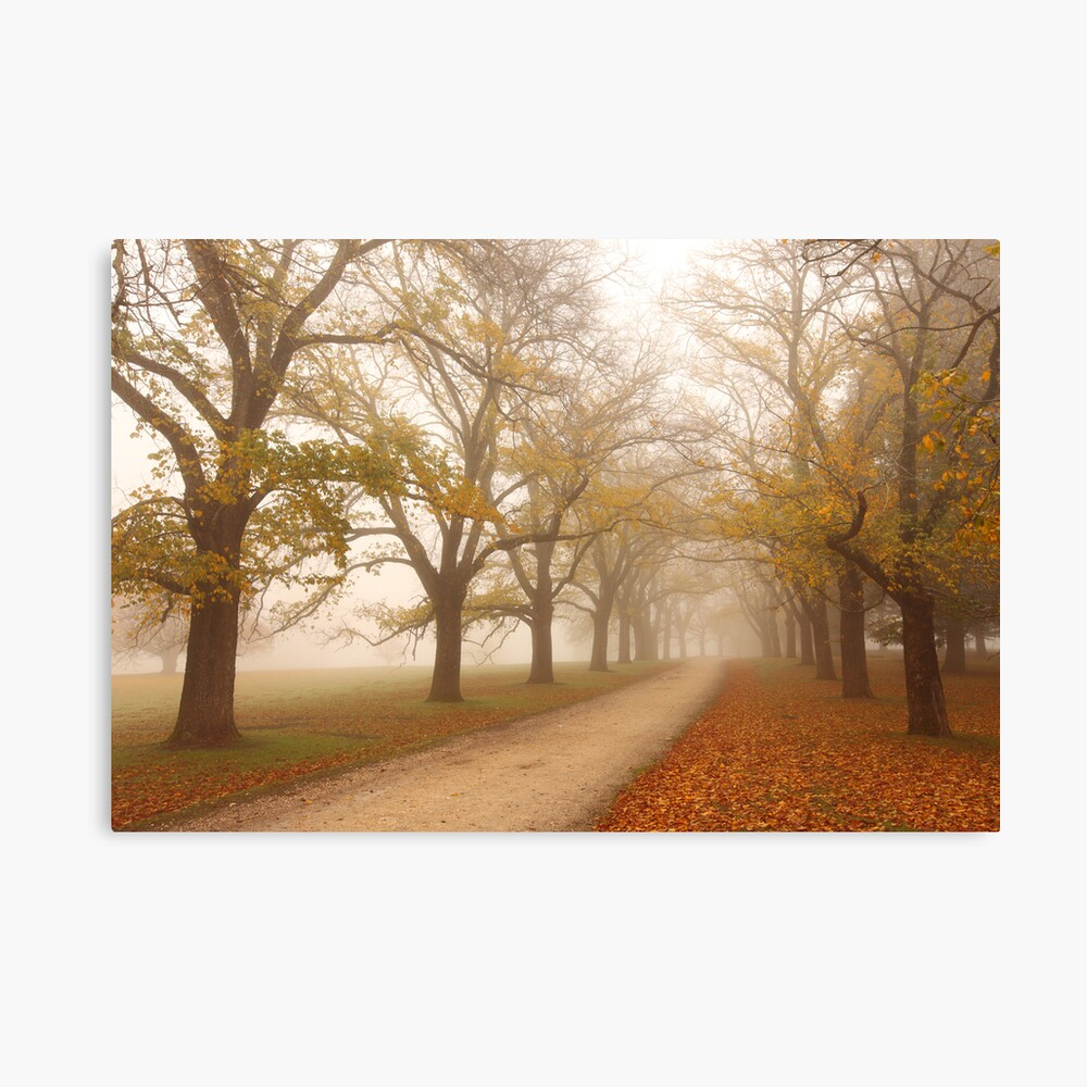 Autumn Fog, Daylesford, Victoria, Australia Canvas Print