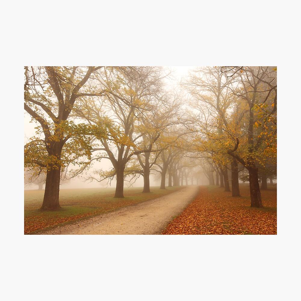 Autumn Fog, Daylesford, Victoria, Australia Photographic Print