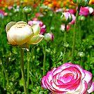 Green Garden by Julie Moore