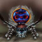 Peacock Spider by mattfossen