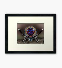 Peacock Spider Framed Print