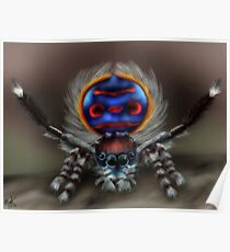 Peacock Spider Poster