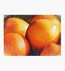 Oranges In Pencil Photographic Print