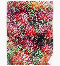 Rambutan In Pencil Poster