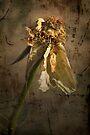 Rust 'n Roses ~ #10 by Rosalie Dale