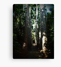 Kauri Avenue - Paronella Park Canvas Print