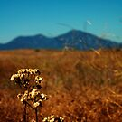 Saddleback Mountains by Julie Moore