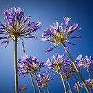 Nature Photography | New Zealand Flowers by Leonardo Ramos