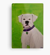 Boxer Dog Metal Print