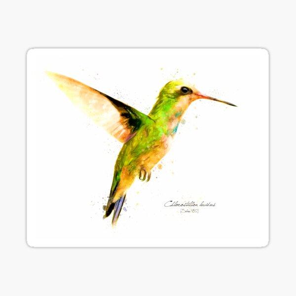 Hummingbird I Sticker