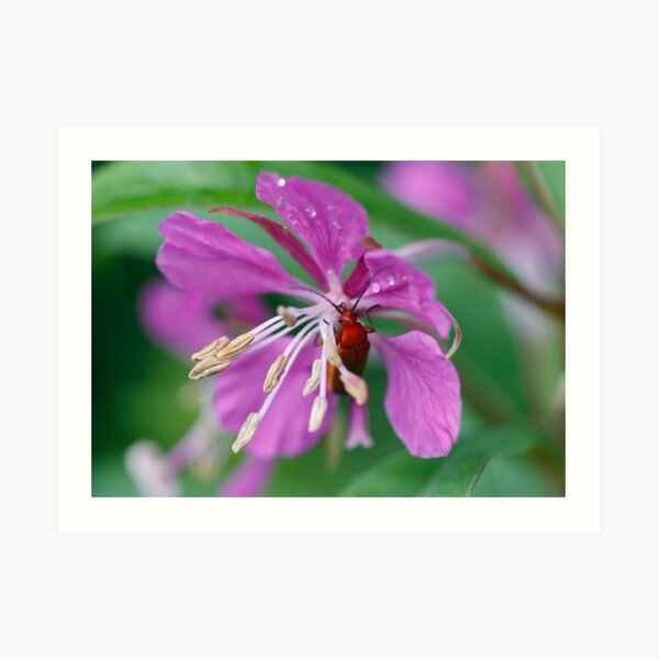 Insect in bloom Art Print