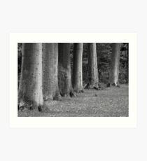 Trees in a Row (<15 min.) Art Print