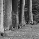 Trees in a Row (<15 min.) by Anne-Marie Bokslag