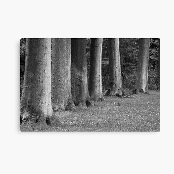 Trees in a Row (<15 min.) Canvas Print