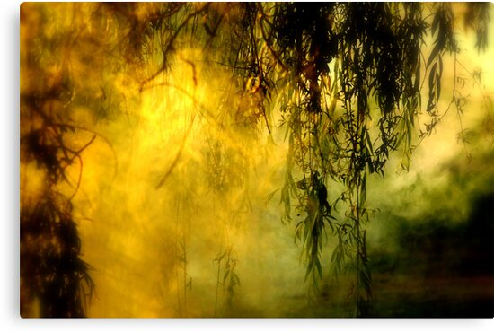 Misty Willow by Annie Lemay  Photography