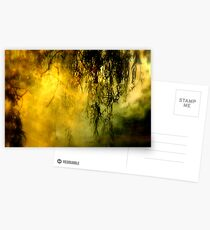 Misty Willow Postcards