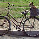 Dog & Bike...  by tonymm6491