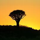 sunset over a kokerboom in namibia by patrick pichard