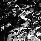 Schwarz-Weiß-Laub von shethatisnau
