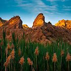 Last Light on Rocks and Reeds by Ralph Goldsmith