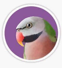 Moustache Parakeet Gifts & Merchandise | Redbubble