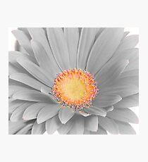 Gerbera Daisy with Yellow Center Photographic Print
