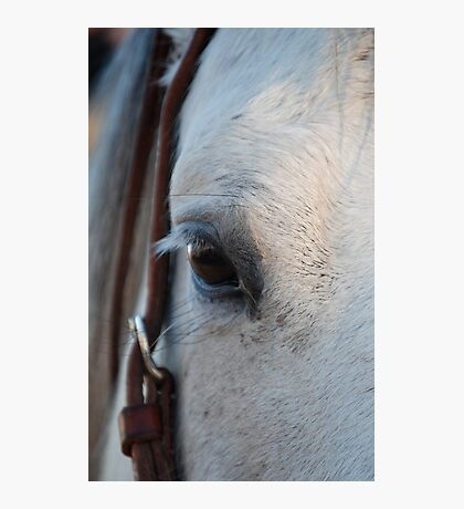 Through the Eye of a Horse Photographic Print