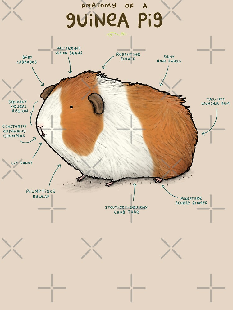 Anatomy of a Guinea Pig by SophieCorrigan