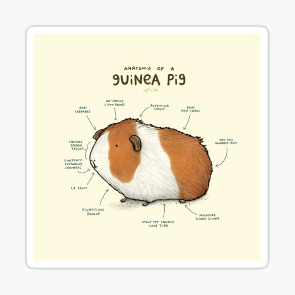 Anatomy of a Guinea Pig Sticker