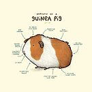 Anatomy of a Guinea Pig by Sophie Corrigan